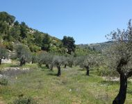 Battir BeautifulTrees